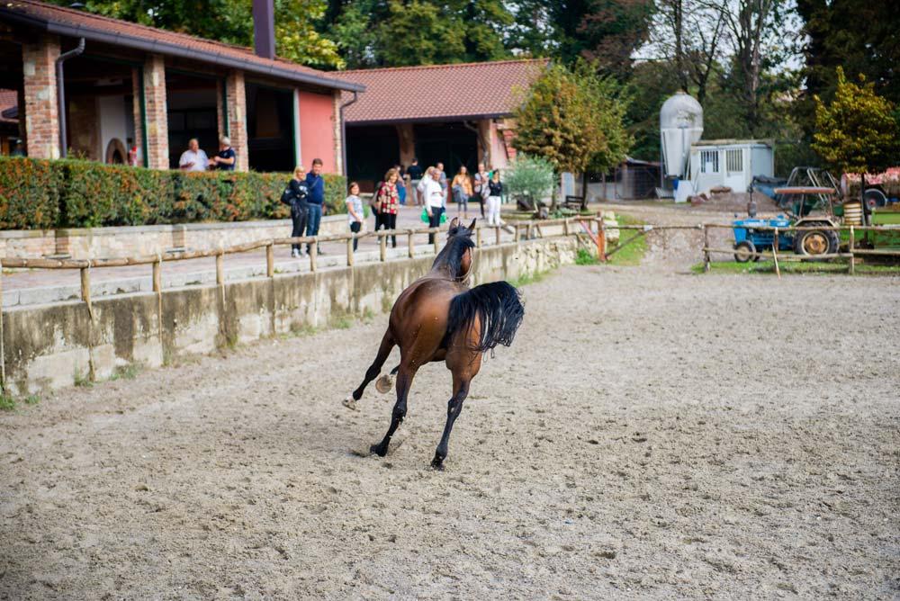 cavallo che corre