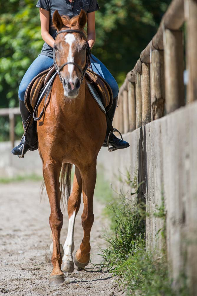 maneggio cavalli como2