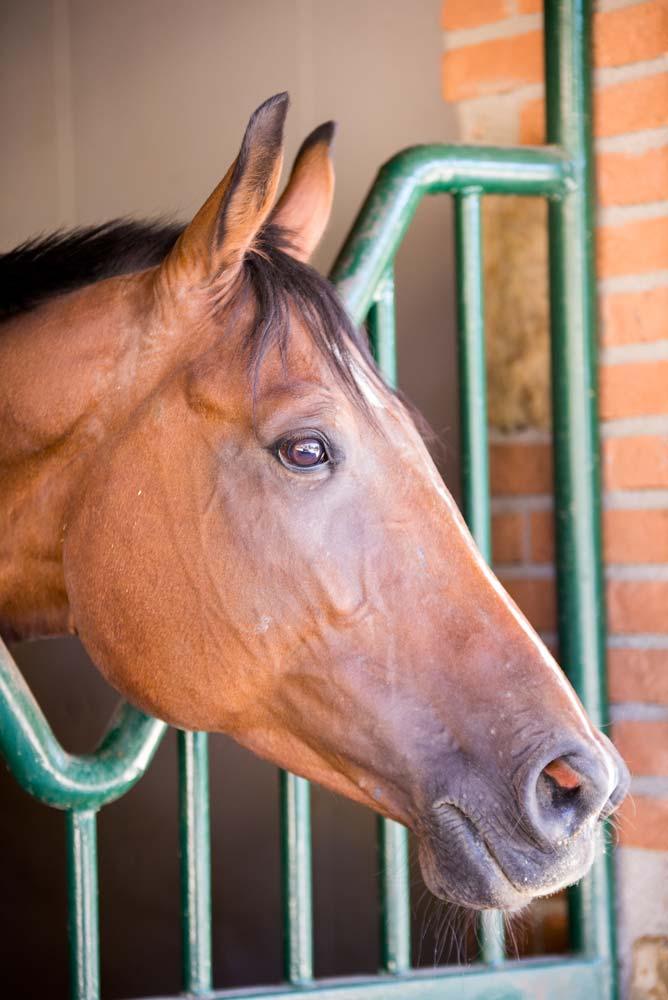 maneggio cavalli como3