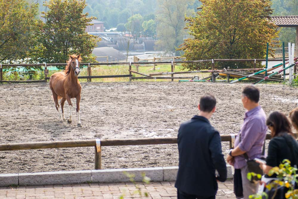 maneggio cavalli