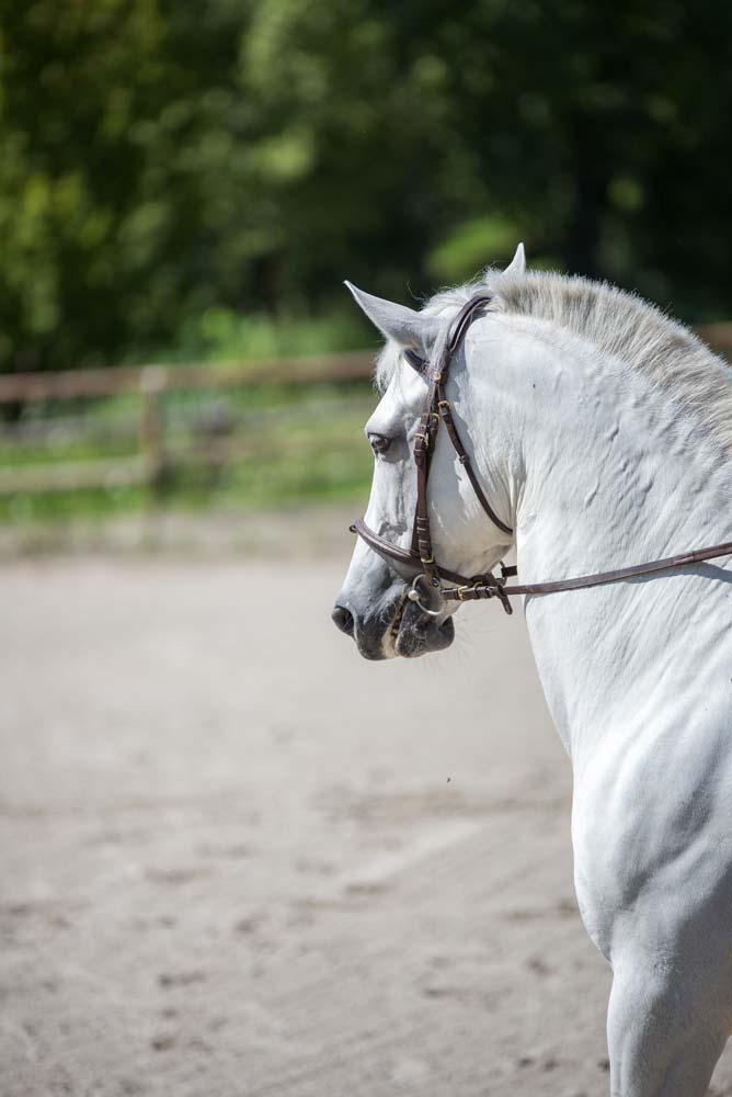 maneggio como agriturismo la cavallina
